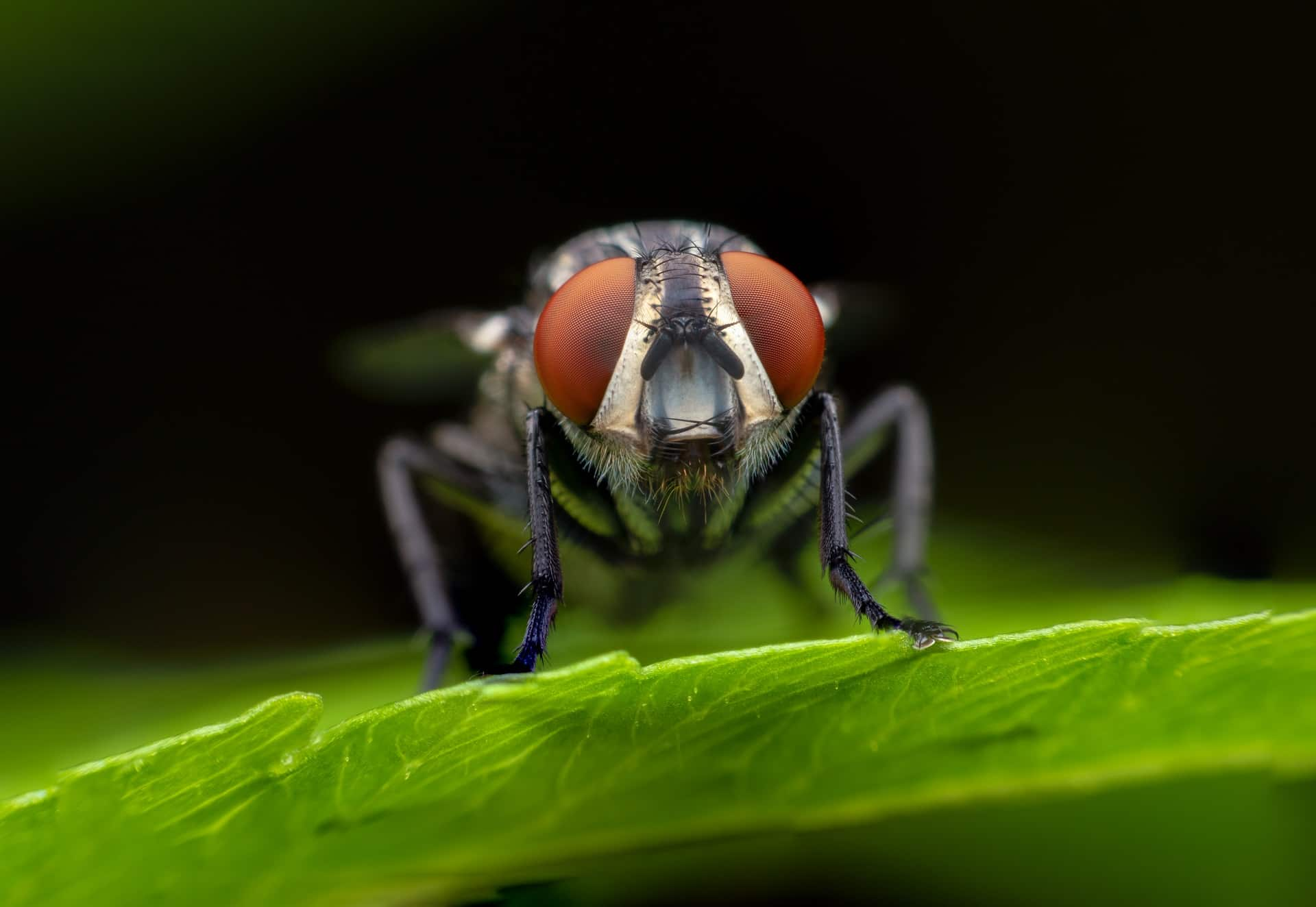 Kako se riješiti muha