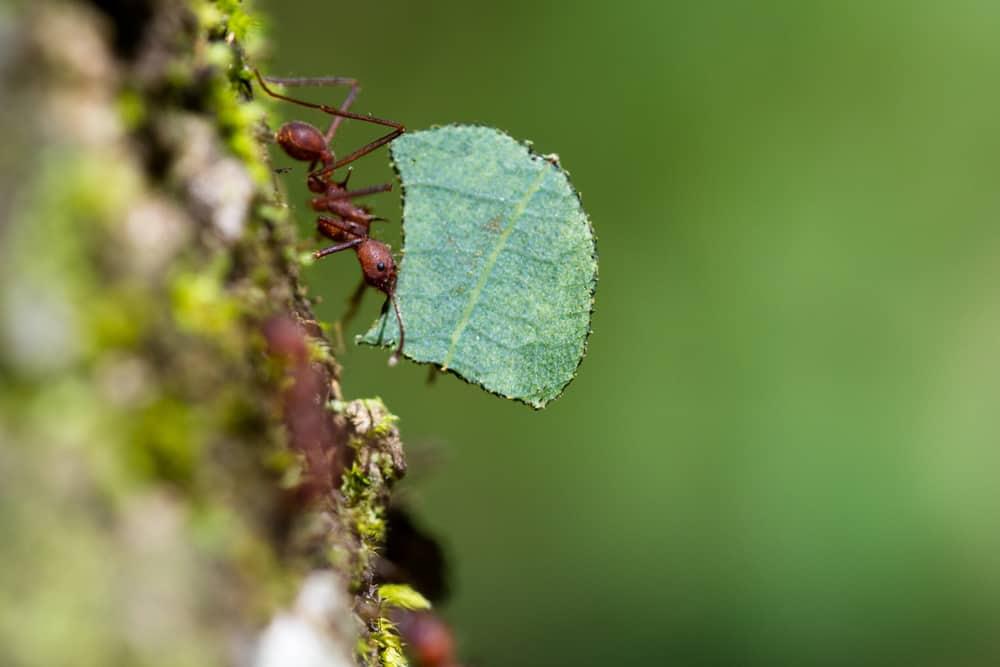 Kako se riješiti mrava