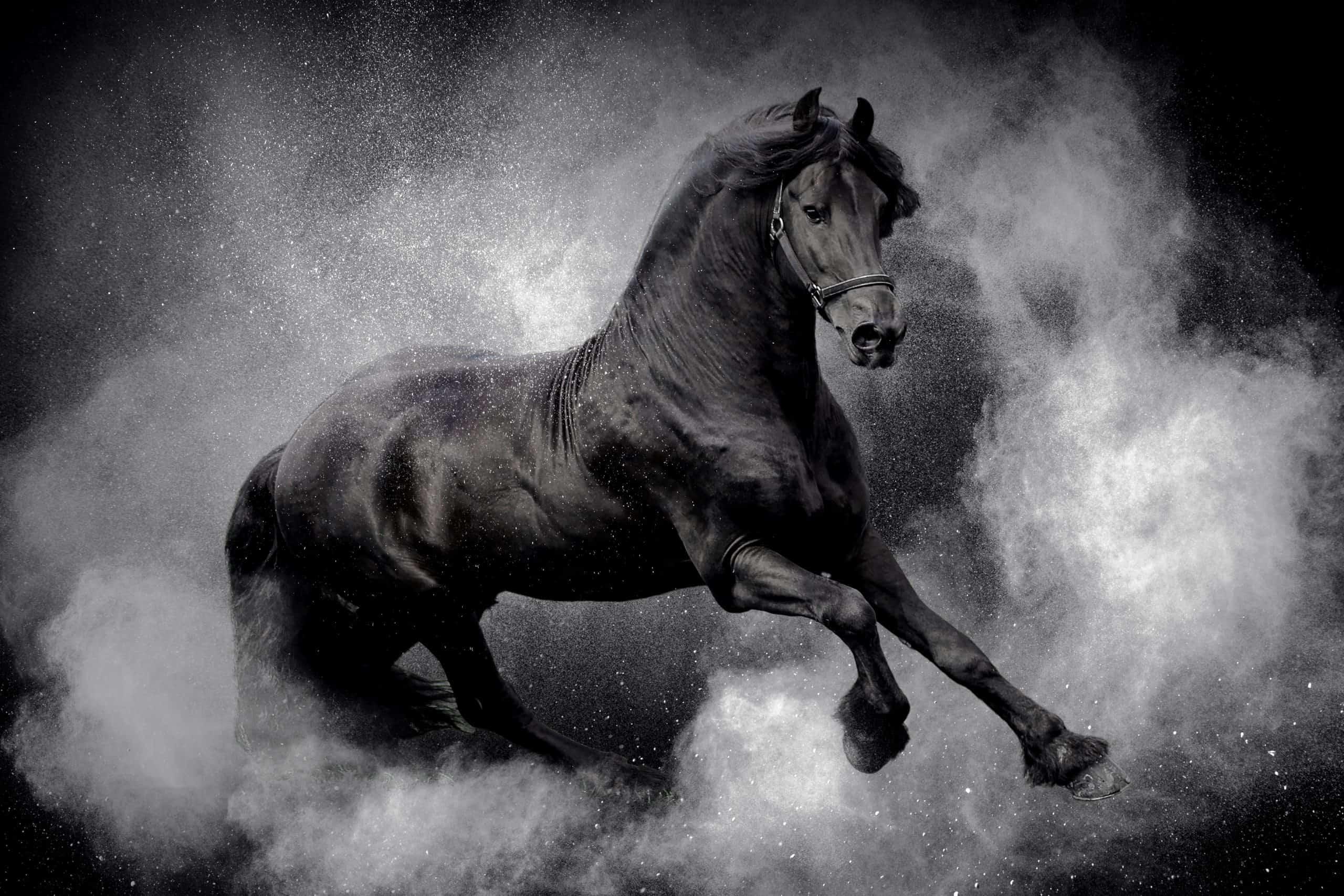 Sanjarica konj
