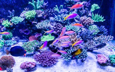 Sanjarica riba